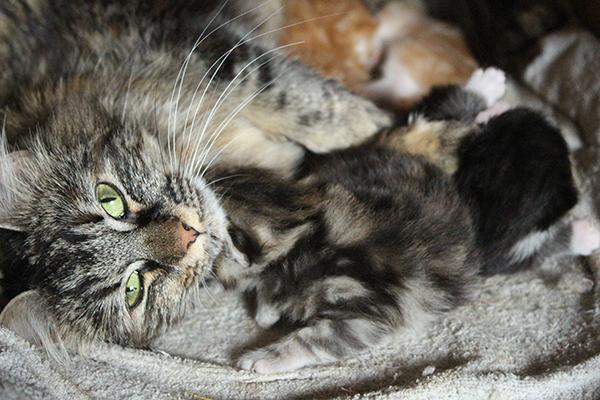 kattungarblogg